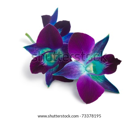 deep purple orchid isolated on a white - stock photo