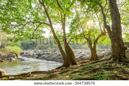 Deep rain forest in tropical zone that look like a heaven on earth. - stock photo