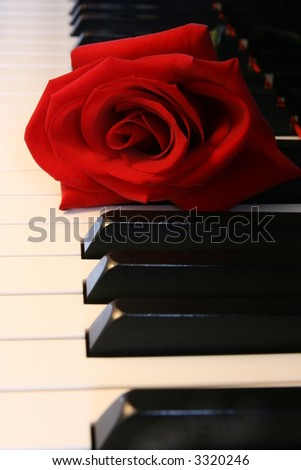 deep Red Rose on Piano keys - stock photo