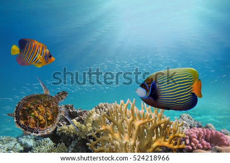 Deep sea and coral reef, coral reef animals, fresh corals at the bottom of the sea, sea ecosystem, coral reef life, colorful corals, yellow corals, green corals.