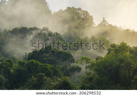 deep tropical forest, canopy tree and fog - stock photo