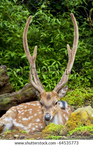 Deer - stock photo