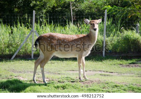 deer, animal, background, zoo, stag, nature, deer cartoon