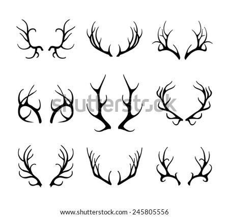 Deer antlers isolated on white. Set of different antlers large, branched and acute