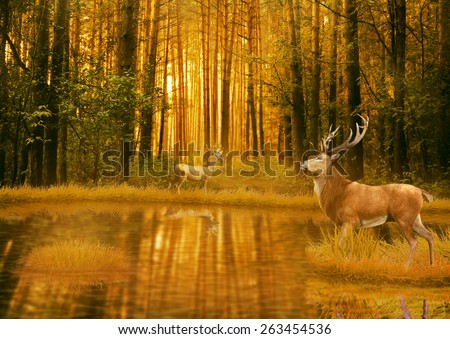 Deer Bucks in summer sunset light standing in an opening in the woods. Two deers with stag horns in forest with lake on background with trees. Wild life landscape scene screen saver - stock photo