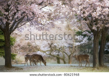 Deer - Cherry Blossom - stock photo