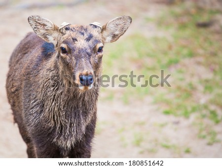 Deer come for you  - stock photo