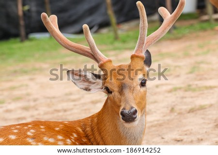 Deer head closeup - stock photo