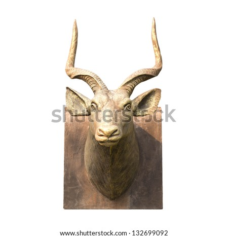 deer head is beautiful on white background - stock photo