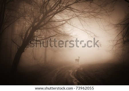 deer in a misty forest on a summer morning - stock photo