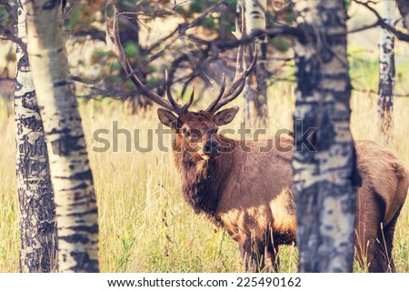 deer in forest - stock photo