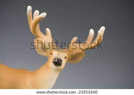 Deer in the studio