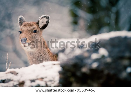 deer  in the white forest - stock photo
