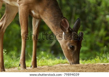 Deer in the woods - stock photo