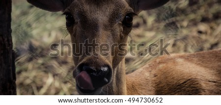 Deer licking it's mouth