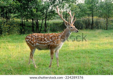 Deer on a background of wild nature.