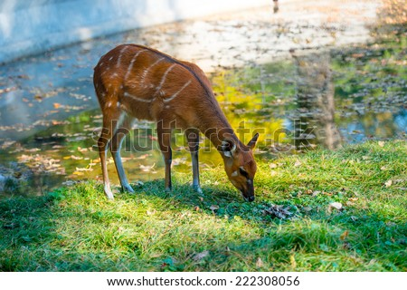 deer on the grass near the pond