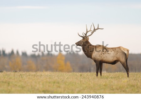 deer over the forest background in sunny day, nature series - stock photo