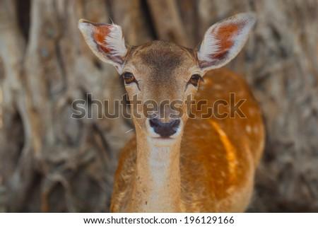 Deer, Portrait of antlers deer - stock photo