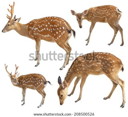 Deer set isolated on white background  - stock photo