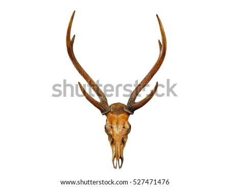 Antlers Isolated Stock Images Royalty Free Images