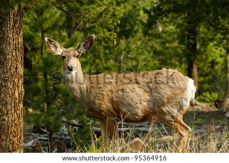 Deer standing in forest