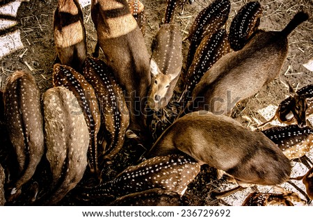 Deer view from above at Chiang mai zoo, Thailand / Young deer view from above / Young deer view from above (animal, deer, background)  - stock photo
