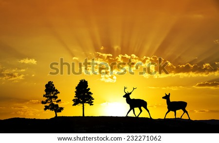 deer wandering through the sun - stock photo
