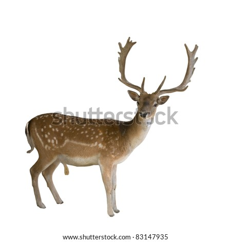 deer with antlers in the woods