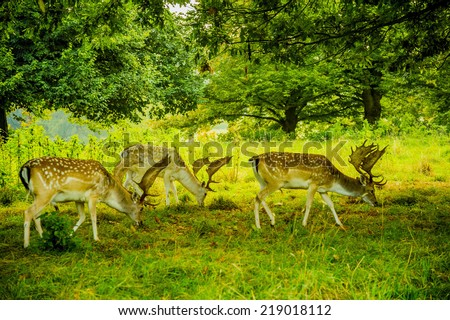 deer with antlers on country estate - stock photo