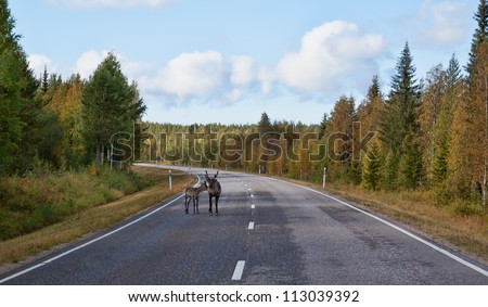 deer with fawn on the road in the autumn forest - stock photo