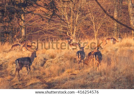 Deers on a forest meadow in the morning