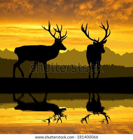 Deers silhouettes in the sunset - stock photo