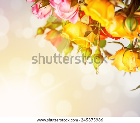 Defocus blur bright spring flowers - roses on sunrise background with color filters - stock photo