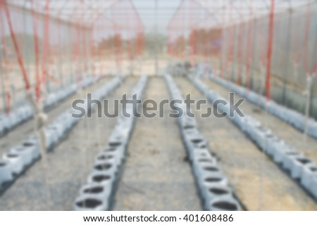Defocused abstract Melon in greenhouse on field agriculture - stock photo