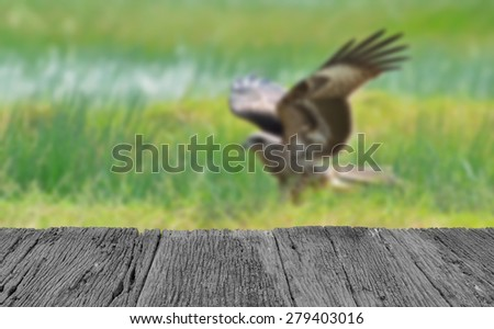 Defocused and blur image of terrace wood and Bird (Black kite) , Thailand for background usage - stock photo