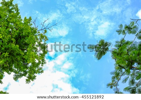Defocused and blurred leaf on cloudy sky background - stock photo