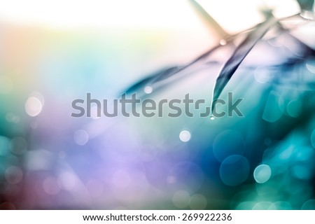 Defocused Bokeh, twinkling lights vivid color blurred bokeh abstract light spring forest background. Natural bokeh from bamboo leaf. Blur picture and soft style. - stock photo