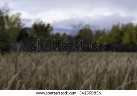 Defocused marsh - stock photo