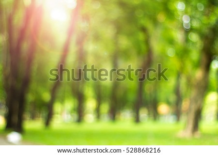 Forest Stock Images Royalty Free Images Amp Vectors