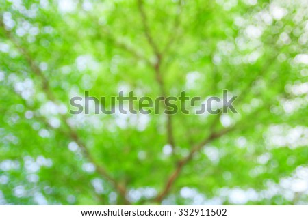 Defocused of light and tree, abstract background for your design.