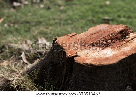 Deforest - stock photo