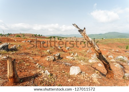Deforestation - stock photo