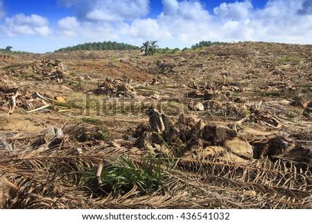Deforestation environmental problem. Destruction of rain forest in Borneo for palm oil plantations. - stock photo