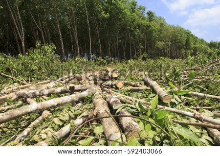Destroying The Amazon Rainforest Stock Images, Royalty-Free Images ...