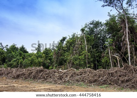 Deforestation environmental problem: Rain forest in Indonesia destroyed for palm oil production. - stock photo