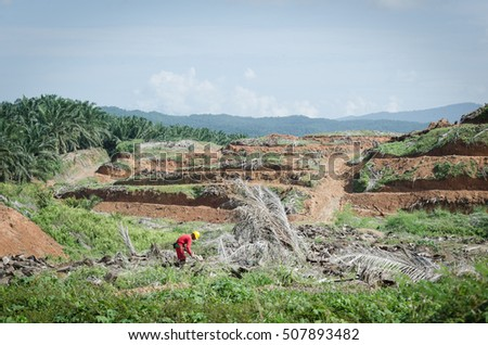Deforestation for palm oil