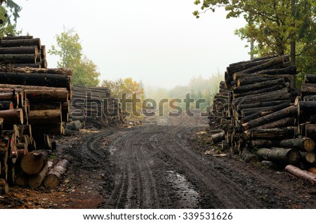 Deforestation: forest has been destroyed by human development, trees felled and stored for the industry. Wooden logs cut and stacked with forest background - stock photo