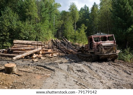 Deforestation. Forestry. Old skidder transports sawed trunks of coniferous trees in the place of processing. - stock photo