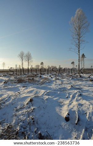 Deforested area in a forest - stock photo